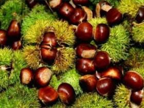板栗/栗子的功效与作用,板栗什么季节吃好