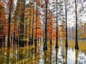 池杉的栽培技术,硬枝扦插_嫩枝扦插