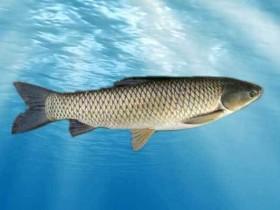 鱼怎么做才好吃-水煮鱼、清蒸鱼、酸菜鱼