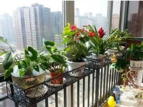 净化空气的室内盆栽-五种净化空气绿植推荐