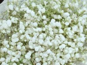白色满天星花语和寓意