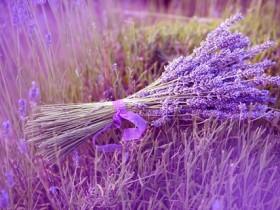 薰衣草的功效与作用