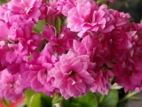 葫芦花的花语和含义
