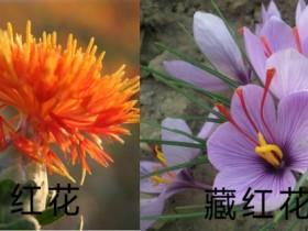 红花和藏红花有什么区别