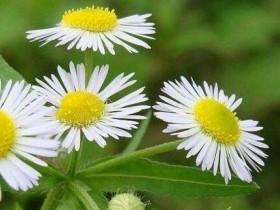 小菊花种类有哪些