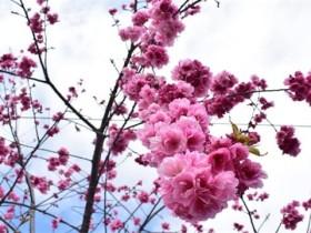 梅花什么季节开花