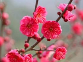 花中四君子梅/兰/竹/菊 分别代表什么意思