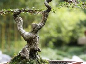 榆树的养殖方法和注意事项