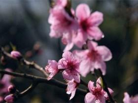 常见会开花的树有哪些